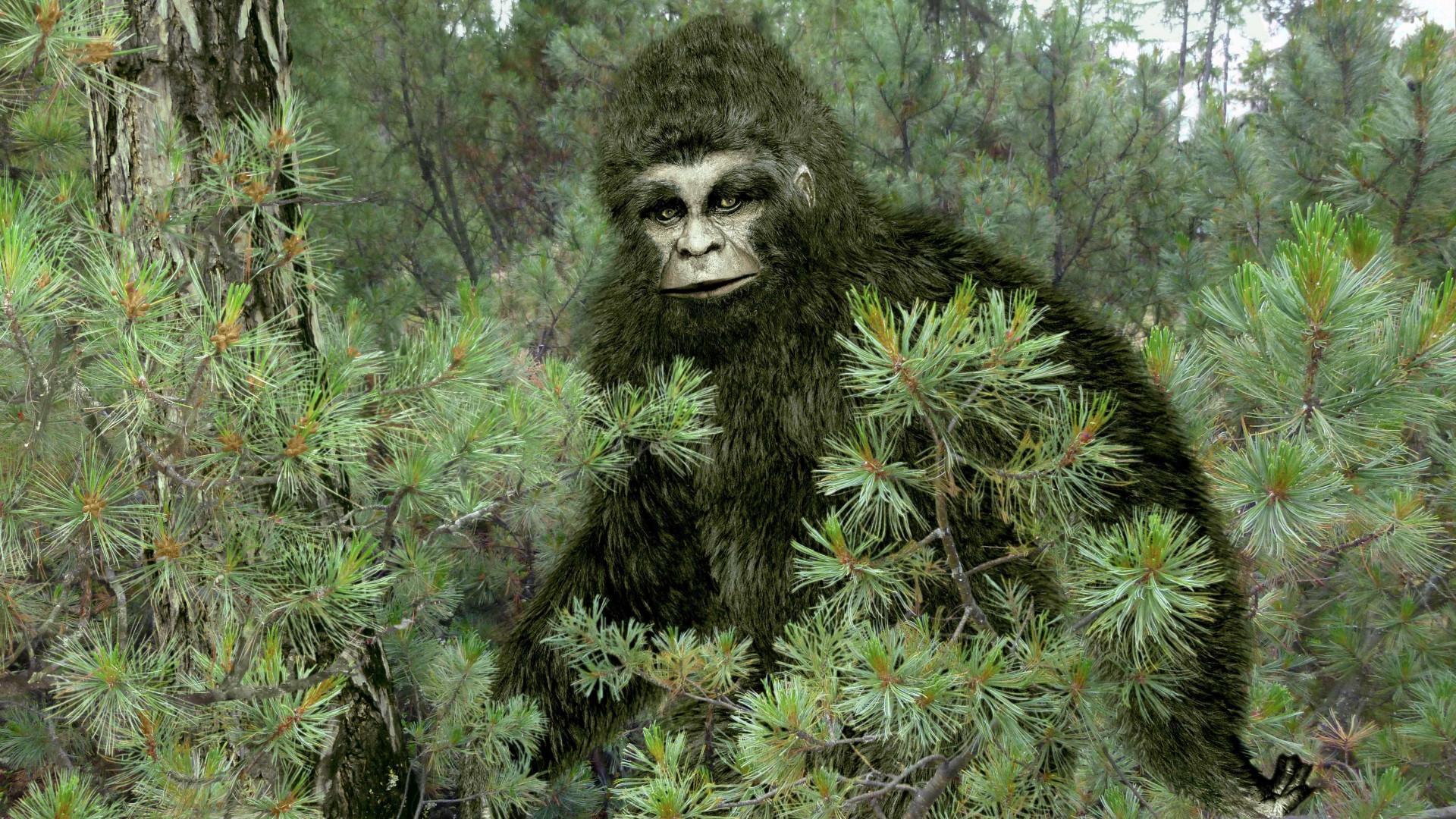 Finally, indisputable proof Bigfoot photos woodland ca