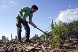 Quintas biológicas atraem estrangeiros para voluntariado