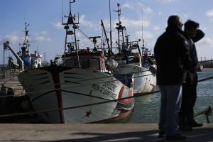 Pesca da sardinha regressa na 2.ª feira após mais de cinco meses