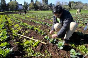Candidaturas a apoios agroambientais arrancam hoje