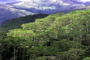 Timor-Leste vulnerável perante as alterações climáticas
