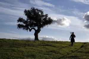 Guia dá a conhecer 200 plantas 'alentejanas'