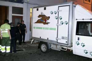 Lei que criminaliza maus-tratos contra animais entra hoje em vigor
