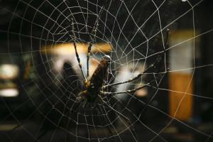 Investigadores desenvolvem seda híbrida com genes de aranha