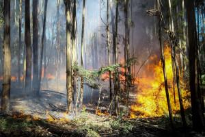 GNR testa drones na prevenção de incêndios
