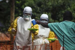 Ébola: Molécula derivada de erva eficaz contra infeção em ratos