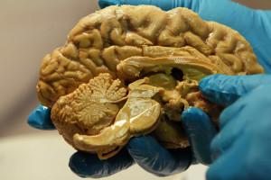 Telepatia a um passo: Enviada mensagem de cérebro para cérebro