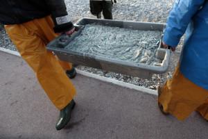 Pescadores lançam livro para incentivar crianças a comer peixe