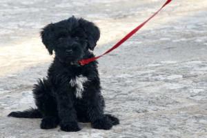 Sabe qual é a raça de cão ideal para si?