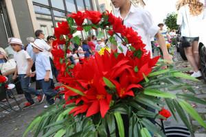 Festa da Flor é sucesso à escala global
