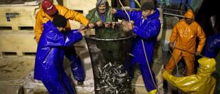 Fixação de apoios ao setor das pescas depende dos Estados-membros