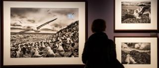 Exposição de Sebastião Salgado encerra com mais de 55 mil visitantes