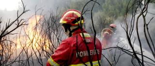Operacionais a combater chamas na zona do Alqueva sobem para 246