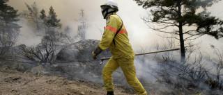 Incêndio em Coimbra já foi dominado