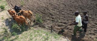 Reino Unido desembolsa 14 milhões para combater El Niño em Moçambique