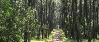 Homem de 60 anos desapareceu nas Serras de Aire e Candeeiros