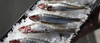 Associação da Pesca de Cerco quer aumento da captura da sardinha