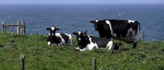 Produtores de leite aprovam as medidas articuladas pela ministra