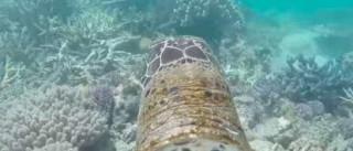Observar um recife pelo olhar de uma tartaruga