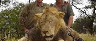 Descoberto homem que matou leão mais acarinhado do Zimbabué