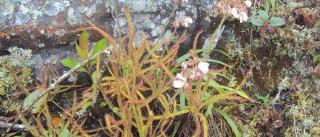 Cientista descobre nova planta através do Facebook