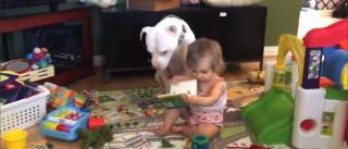 O amor entre o pitbull Pajamas e a bebé Ellie