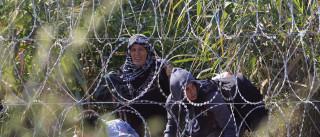 Cerca de 300 migrantes fogem de campo na Hungria
