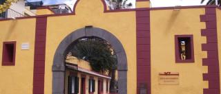 Mudas.Museu da Madeira abre quinta-feira em novo espaço
