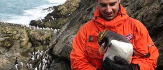 Cientista de Coimbra nomeado membro do British Antarcitc Survey