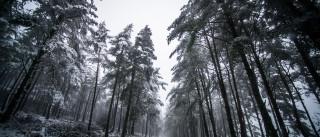 Nevão corta acesso à Serra da Estrela