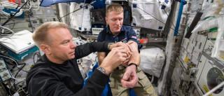 Experiência quer apurar efeitos do espaço nos astronautas