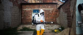 Não, o vírus Zika não é o 'novo Ébola'. E em Portugal nem existe