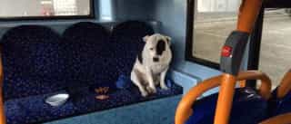 Tristeza de cão abandonado em autocarro está a comover internet
