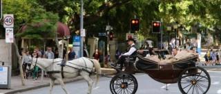 Uber: Um cavalo e uma carruagem para dar 15 mil emails ao governo