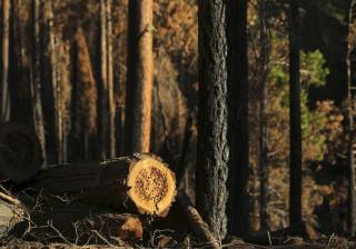 Natureza 'vinga-se' de homem que tentava cortar árvore