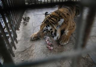 Animais do zoo de Gaza estão a morrer. Organização tenta ajudar