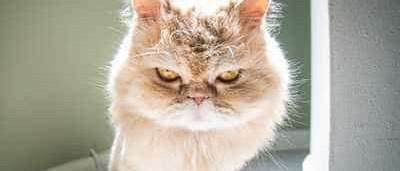 Ao contrário do que parece, os gatos têm emoções (e muitas)