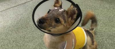 Atacou cão com água a ferver e atirou-o de um 4º andar