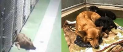 Cadela com instinto maternal foge para consolar cães bebés