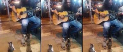 Os maiores apreciadores deste artista de rua são... gatos