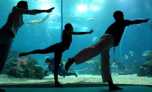 Exercício Praticar yoga nos locais mais inesperados-veja fotos Naom_555c4e696aa61