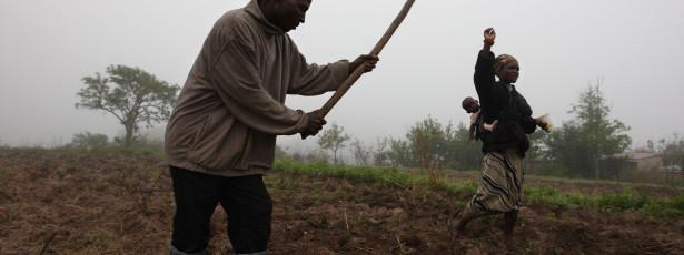 Guiné-Bissau defende aposta na agricultura no 41º aniversário da independência