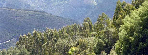 Instabilidade legislativa é um grave problema para a floresta portuguesa - debate