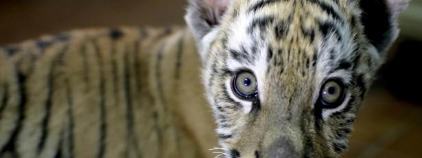 Bruxelas vai rever regras contra tráfico de animais selvagens