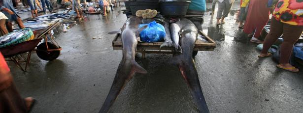 Guiné-Bissau quer proibir corte das barbatanas de tubarão