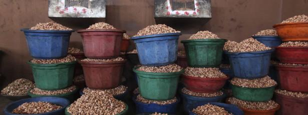 Preço da castanha de caju em alta beneficia produtores