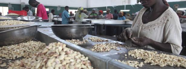 Banco Mundial e Guiné-Bissau defenderam fim de imposto sobre caju