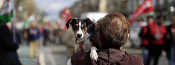 É oficial: Se maltratar o seu animal de companhia pode ir preso