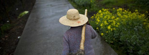 Ambientalistas desiludidos com nova PAC
