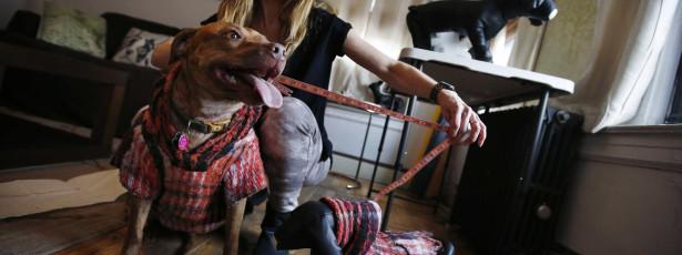 Assunção Cristas quer limitar número de cães por casa